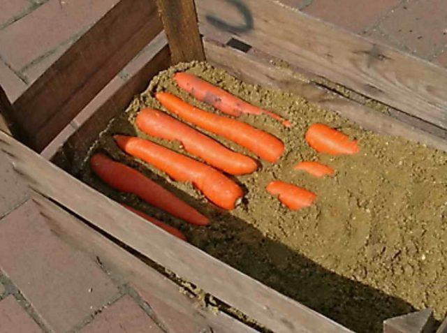 Что нужно для того, чтобы морковка хранилась до следующего лета?