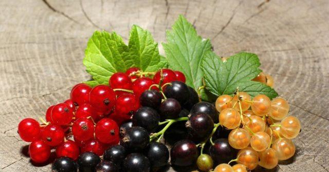 Можно ли сделать ягоды смородины слаще?