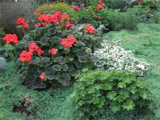 Какие комнатные растения можно на лето высаживать на улицу и как это делать?