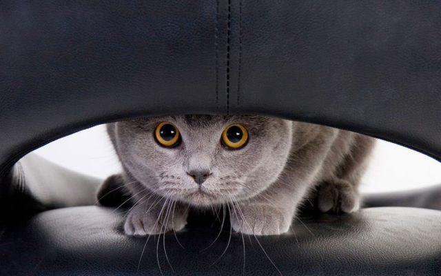 Как избавиться от последствий кошачьей мочи: запах и пятна