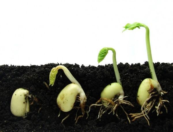 Плохо всходят семена: возможные ошибки