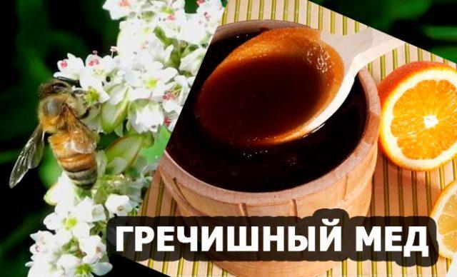 «Вред или польза»: Как гречишный мед влияет на наш организм?