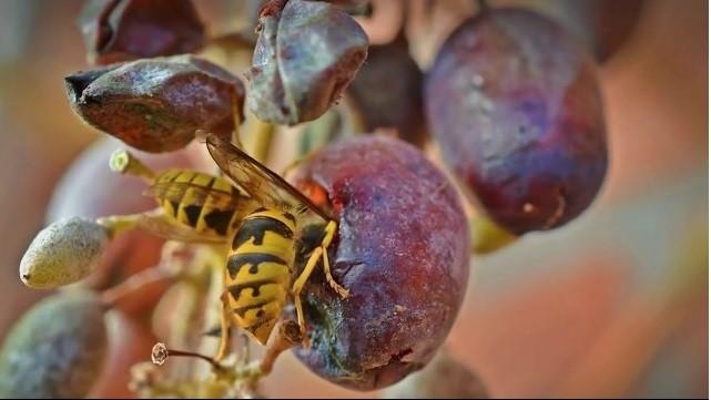 «Раз и навсегда»: Как избавиться от муравьев и ос в огороде