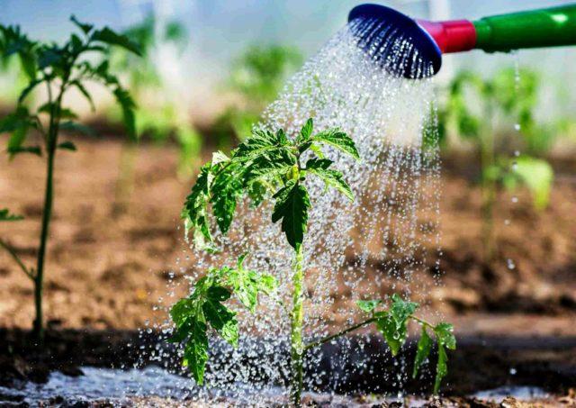 Как правильно поливать растения, чтобы урожай радовал?