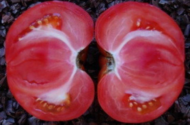 Почему плоды томатов вырастают с белыми прожилками внутри?