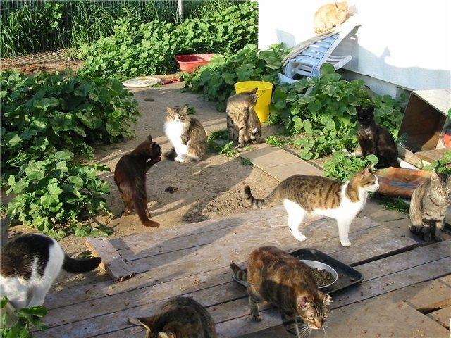 «Неприятный запах»: Как отучить кота метить территорию на дачном участке?