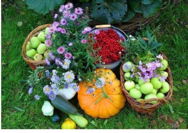«Уход круглый сезон»: Какие важные дела необходимо сделать в саду в июле?