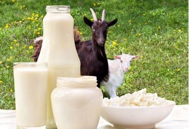 «Вред или польза»: Как козье молоко влияет на организм человека?