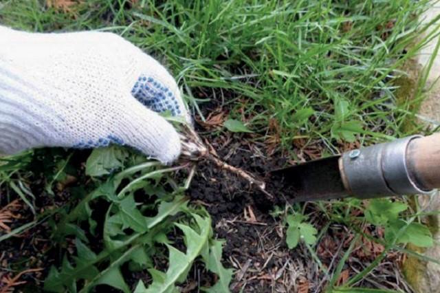 как избавиться от сорняков на грядках