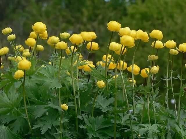 «Неприхотливые для дачи»: Топ самых красивых цветов, которые украсят сад на много лет вперёд