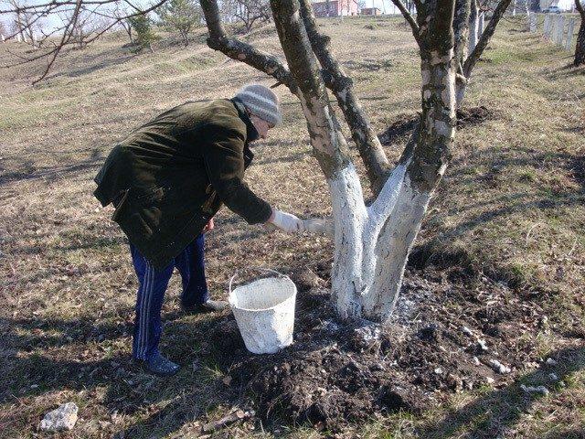 Подготовка яблоневого сада к зиме