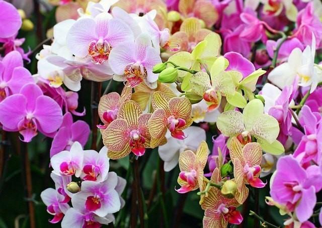 Как правильно поливать орхидею, чтобы цветок был здоровым?