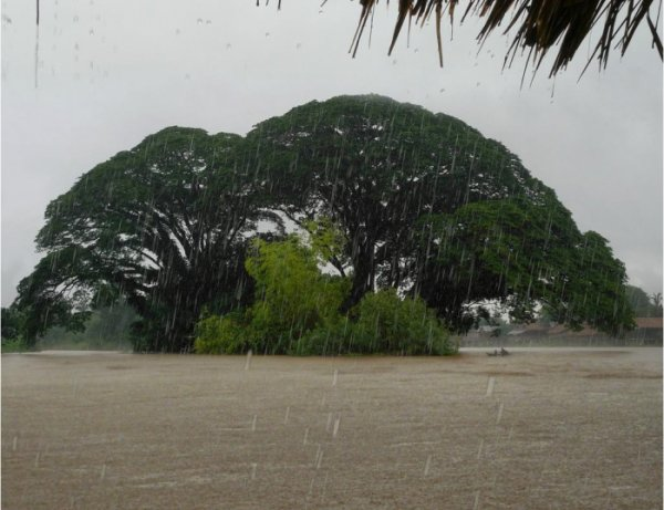 дожди в джунглях
